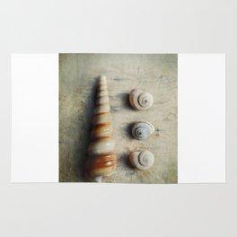Shells on Beach wood. Rug