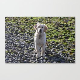 time for walkies Canvas Print