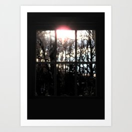 Shadows and Tall Trees Art Print