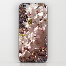 Spring pink iPhone & iPod Skin