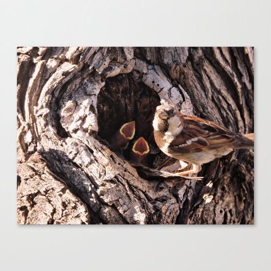 House Sparrow Keeping House Canvas Print