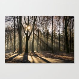 Winter Sunlight Canvas Print