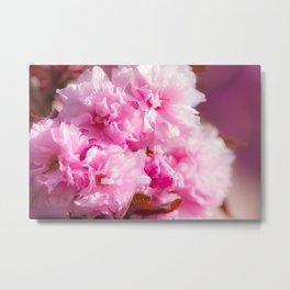 Pink fower patern Metal Print