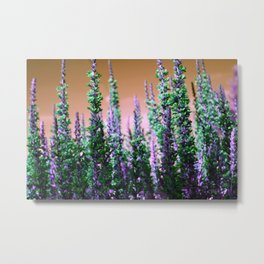 Mini Conifers Metal Print