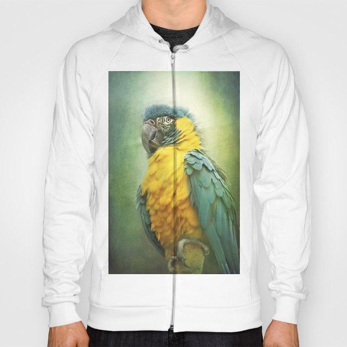 Bright parrot! Hoody