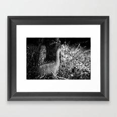 DinoLand II Framed Art Print