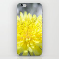 Spring has come iPhone & iPod Skin