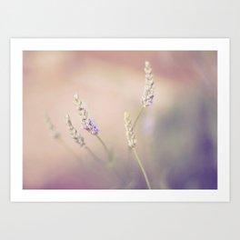 Lavender Dreaming Art Print