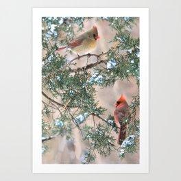 Winter Pair Cardinals (v) Art Print