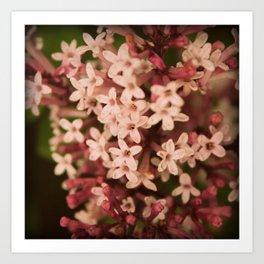 Sweet Lilac Breeze Art Print