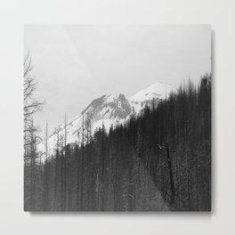 Trees Die Metal Print