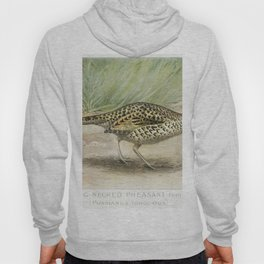 Ring-Necked Pheasant Female (Phasianus Torquatus) illustrated by JL Ridgway (1859-1947) and WB Gille Hoody
