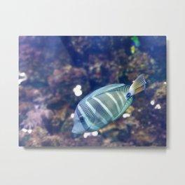 Stunner Fish Metal Print