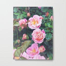 Sorbet Roses Metal Print