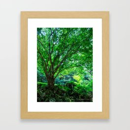 The Greenest Tree Framed Art Print