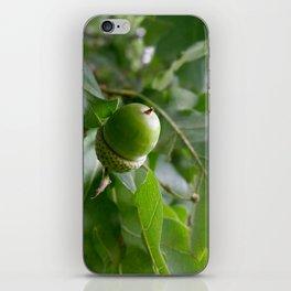 an oak fruit iPhone Skin