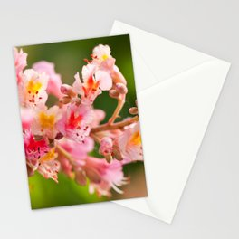 Aesculus red chestnut tree blossoms Stationery Cards