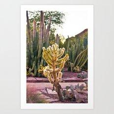 Desert Botanical Gardens  Art Print