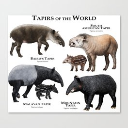 Tapirs of the World Canvas Print