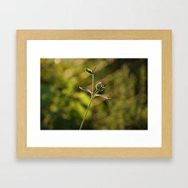 Wild garden flower Framed Art Print