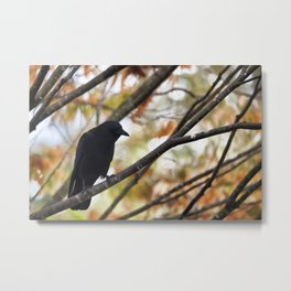 Autumn Crow Metal Print