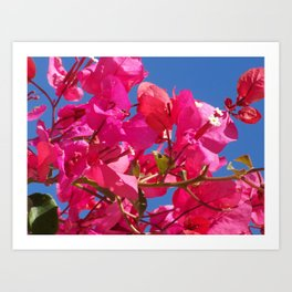 Bougainville in pink Art Print
