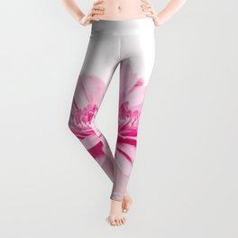 Pink gerbera Leggings