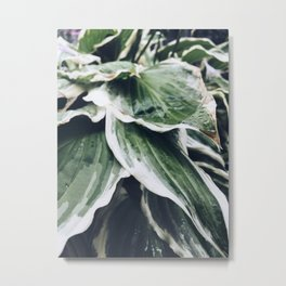 Leafs in the garden Metal Print