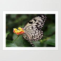 White Butterfly On Flower Art Print