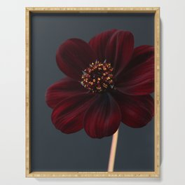Chocolate Cosmos Flower Serving Tray