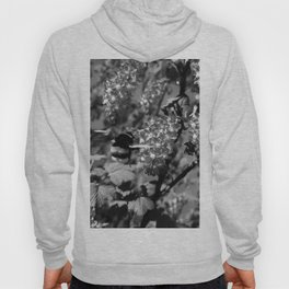 Bumble Bee and Blood Currant Ribes Sanguineum bw Hoody