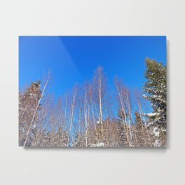 Leafless in Winter Metal Print