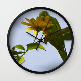 Birds from Pantanal Periquito-de-encontro-amarelo Wall Clock