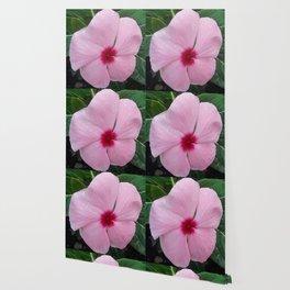 Simplicity in a Pink Flower Wallpaper