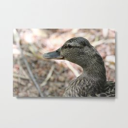 Duck Close Up Metal Print
