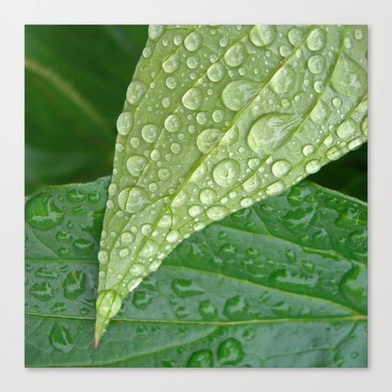 rainy drops I Canvas Print