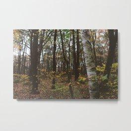 Forest Trail L Metal Print