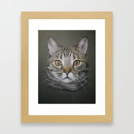 British shorthair cat Framed Art Print