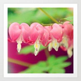 Bleeding heart flowers Art Print