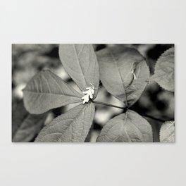 Baby Oak Leaf Black and White Canvas Print