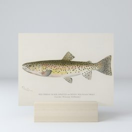 Red Throat Black Spotted or Rocky Mountain Trout (Salmo Mykiss Walbaum) illustrated by Sherman F. De Mini Art Print