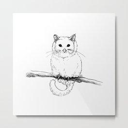 Owlcat Metal Print