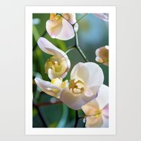 orchid Art Prints featuring Orchid by Joke Vermeer