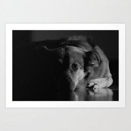 Dog lying on floor Art Print