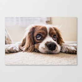 Cute dog with Big Innocent Eyes Canvas Print