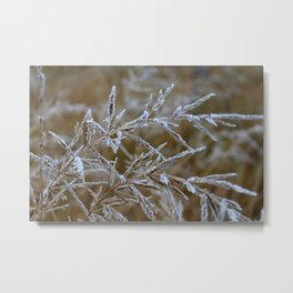 Ice frozen on plant branches in winters Metal Print