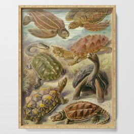 Ernst Haeckel Chelonia 1904 Poster Serving Tray