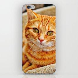 Cute red cat iPhone Skin