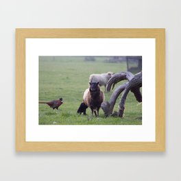 New Life at the Farm Framed Art Print