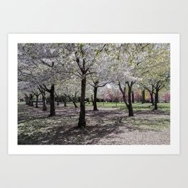 Spring at Flushing Park, Queens Art Print